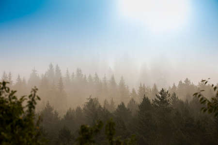 mystic morning in the autumn forest. beautiful landscape