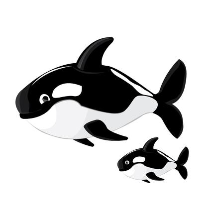 killer: Killer whale cartoon vector
