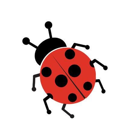 ladybug: Ladybug isolated on white