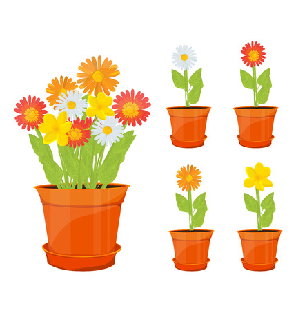 grass flowers: colorful flowers in pots
