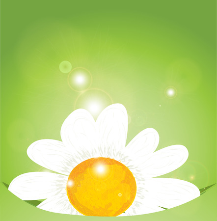 holiday background: Holiday background with bouquet of flowers Illustration