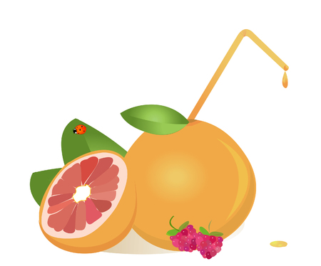 grapefruits: grapefruits juice ,vector Illustration