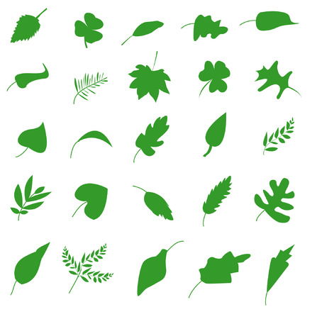 nettle: Green leaf icons set. Nature & ecology image.