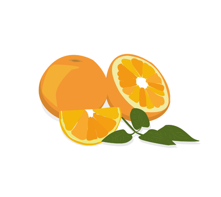 green leafs: Ripe oranges with fresh green leafs. Vector.