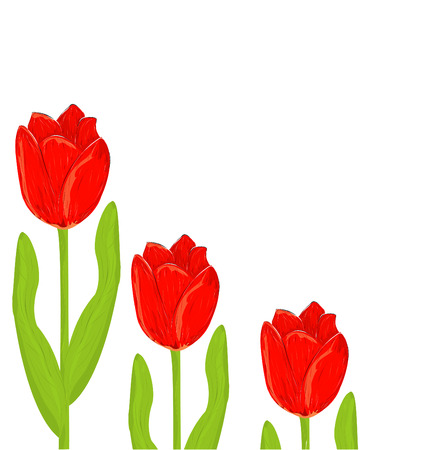 red tulip: red tulip spring card