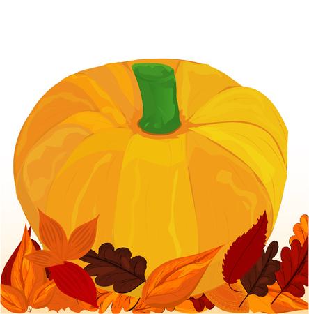 pumpkin seeds: Single Orange Pumpkin Illustration
