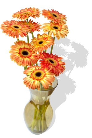 Chrysanthemums  in a vase on white with shadow and clipping path photo