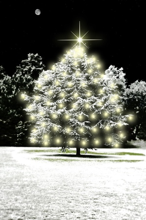 snow covered fir tree with christmas lights on a star studded night with the moon out photo