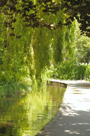 overhanging: Walkway Along the River with Trees Overhanging the River Stock Photo