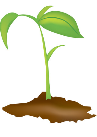 Vector illustration of a young green seedling Stock Vector - 4713481