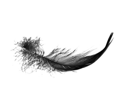 black feather: black feather floating towards ground, close up Stock Photo