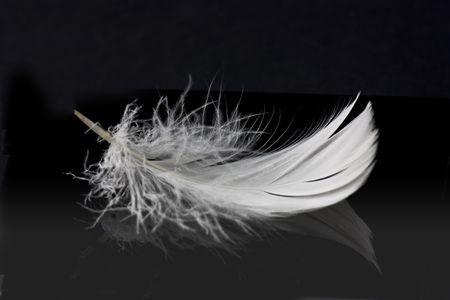 pluma blanca: pluma de color blanco sobre fondo negro s�lido con la reflexi�n