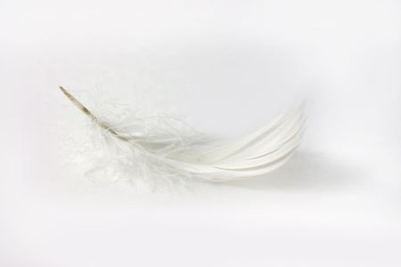 white feather: delicate white feather on white background with shadow
