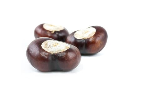 conkers: set of three conkers on white background