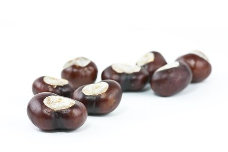 conkers shot on a white background in studio Stock Photo - 5687333
