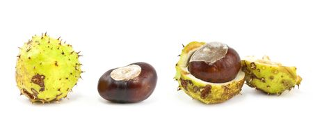conkers and conker leaves and cases in the studio Stock Photo - 5687335