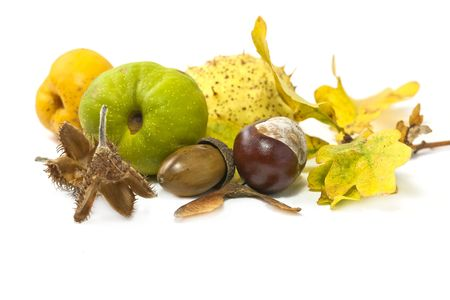 autumn still life arrangement yellows and browns Stock Photo - 5687336