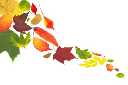 autumn leaves fluttering to the ground on white  photo
