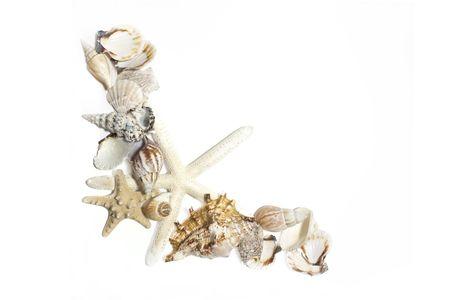 starfish and shells set on white background