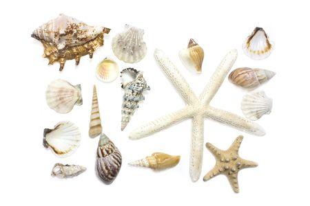 shells: starfish and shells set on white background
