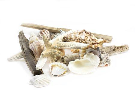 sealife: Stillleben von verschiedenen Shells, die Sch�sse auf wei�em Hintergrund
