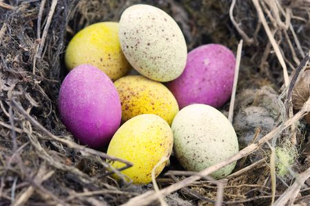 real nest with speckled chocolate easter eggs in photo