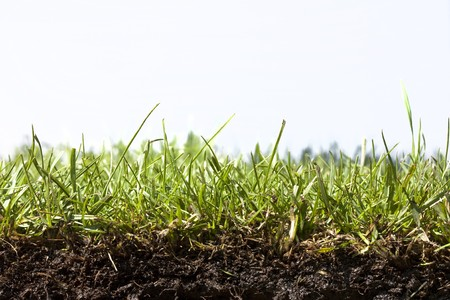 grass close up: Strip of glass from cut turf showing routes and soil on white background