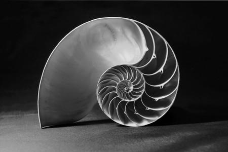 mértan: Monochrome shot of the perfect fibonacci pattern inside a nautilus shell