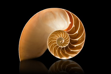 A perfect and amazing fibonacci pattern in a nautilus shell photo