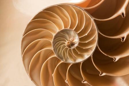descubrir: Un perfecto cerca de un patr�n de fibonacci sorprendente en un shell de nautilus