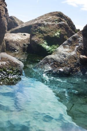 barnacles: pool di roccia con denti di cane sulle rocce