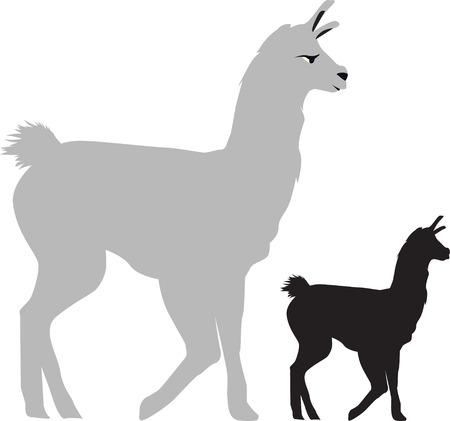 llama: walking llama on a white background