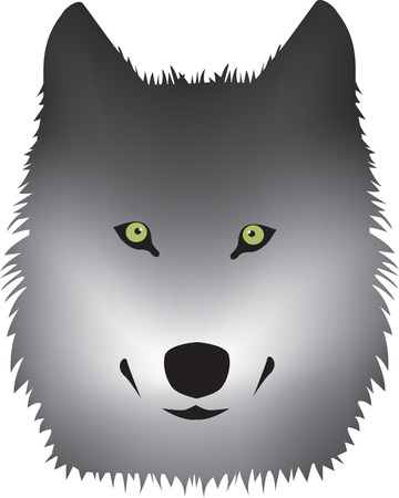 green eyes: grey wolf with green eyes on white