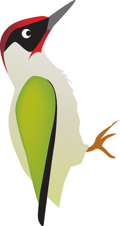 illustratie van een specht vogel op een witte achtergrond Stock Illustratie