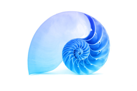 青いオーバーレイに影響を与えると白い背景色とに分離したオウムガイの殻の完璧な素晴らしいフィボナッチ パターン 写真素材