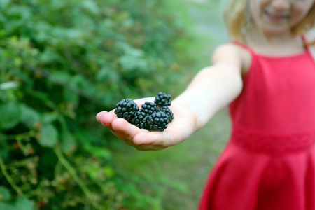 picking wild blackberries outside, in the haand of a little blonde girl Foto de archivo