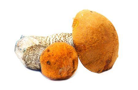 fungous: Two mushrooms