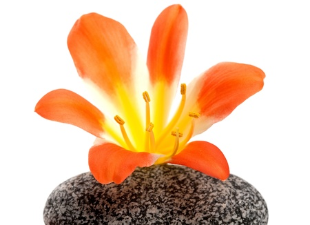 A beautiful amaryllis flower on the top of the stone tower photo