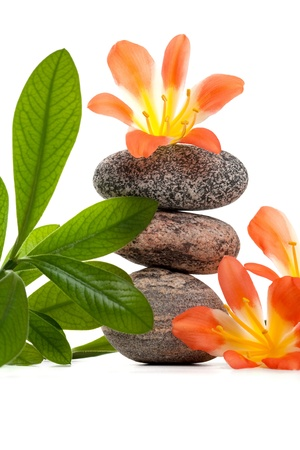 Zen stones with flowers and green plant photo