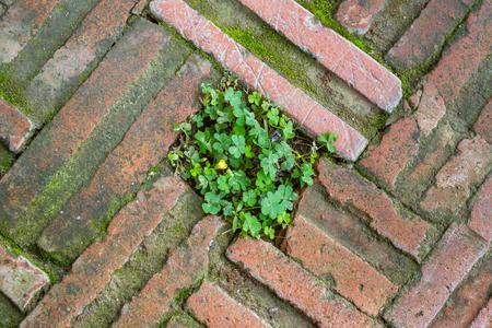 unity small flower: small tree on brick sidewalk