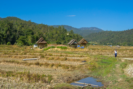 Rice field after harvested at Pai, Thailand