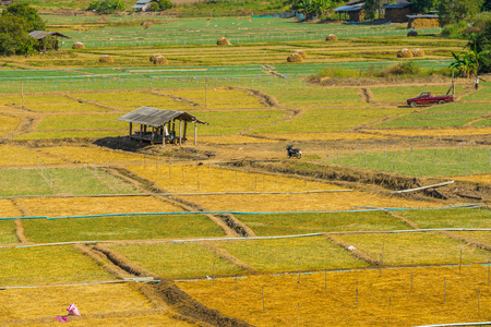 A cottage in Garlic field at Pai, Thailand