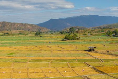 Garlic field in Pai, Thailand Stock Photo