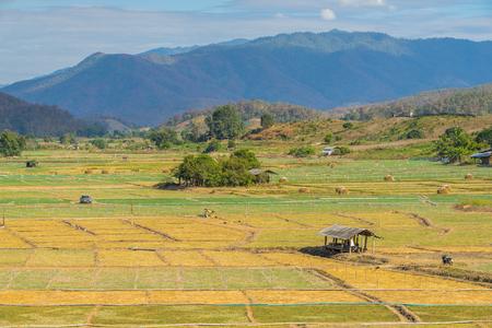Garlic field with hut in Pai, Thailand