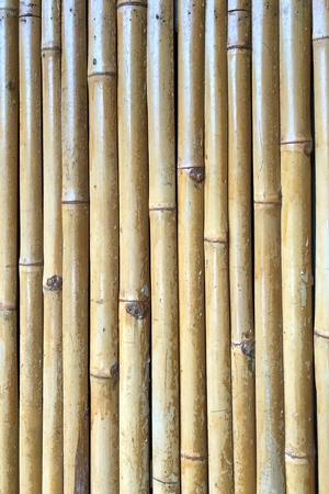Bamboo wall as the background texture
