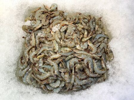 Crevettes fraîches sur glace au supermarché à vendre Banque d'images