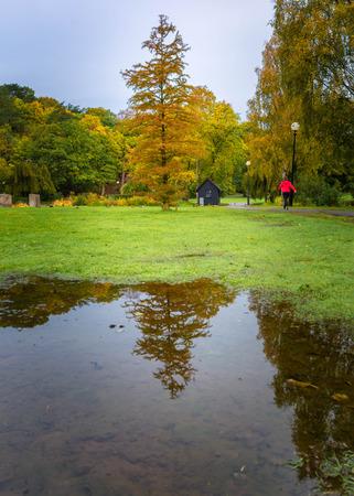Reflection of a tree full of fall colors in slottsskogen,Gothenburg,Sweden