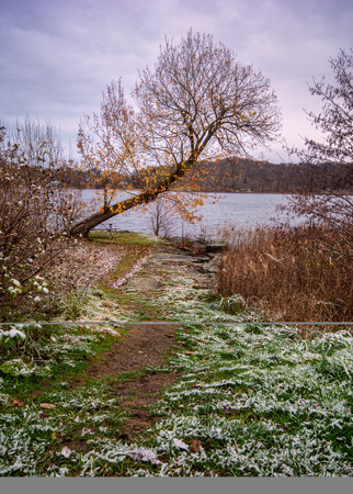 Foot path with fresh snow leading one to a lone tree with few colorful leaves next to lake gothenburg sweden