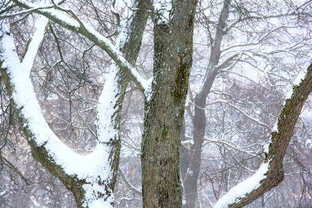 Trees covered in thick fresh snow at Gothenburg,Sweden