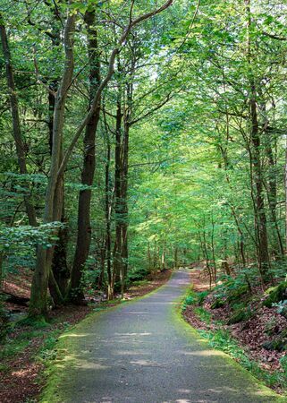 Trekking track amidst green canopy of trees andcalm water stream, Gothenburg, Sweden Stock Photo